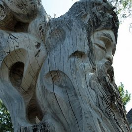 Large tree stumps on Luce Street were saved and carved by local artists, Jay Hungate and Glenn Szegedy, adding interest to the streetscape.