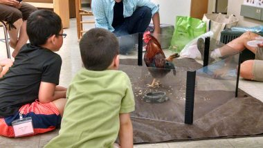 Bartlett students meet chickens