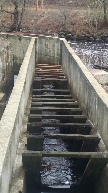 The baffles control the flow and turbulence of the water so that the fish are attracted to go up the ladder and around the dam.
