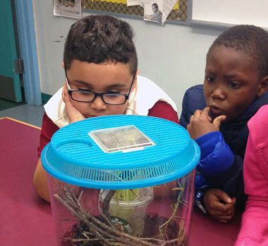 "McAuliffe students look closely at ""walking stick"" insects"