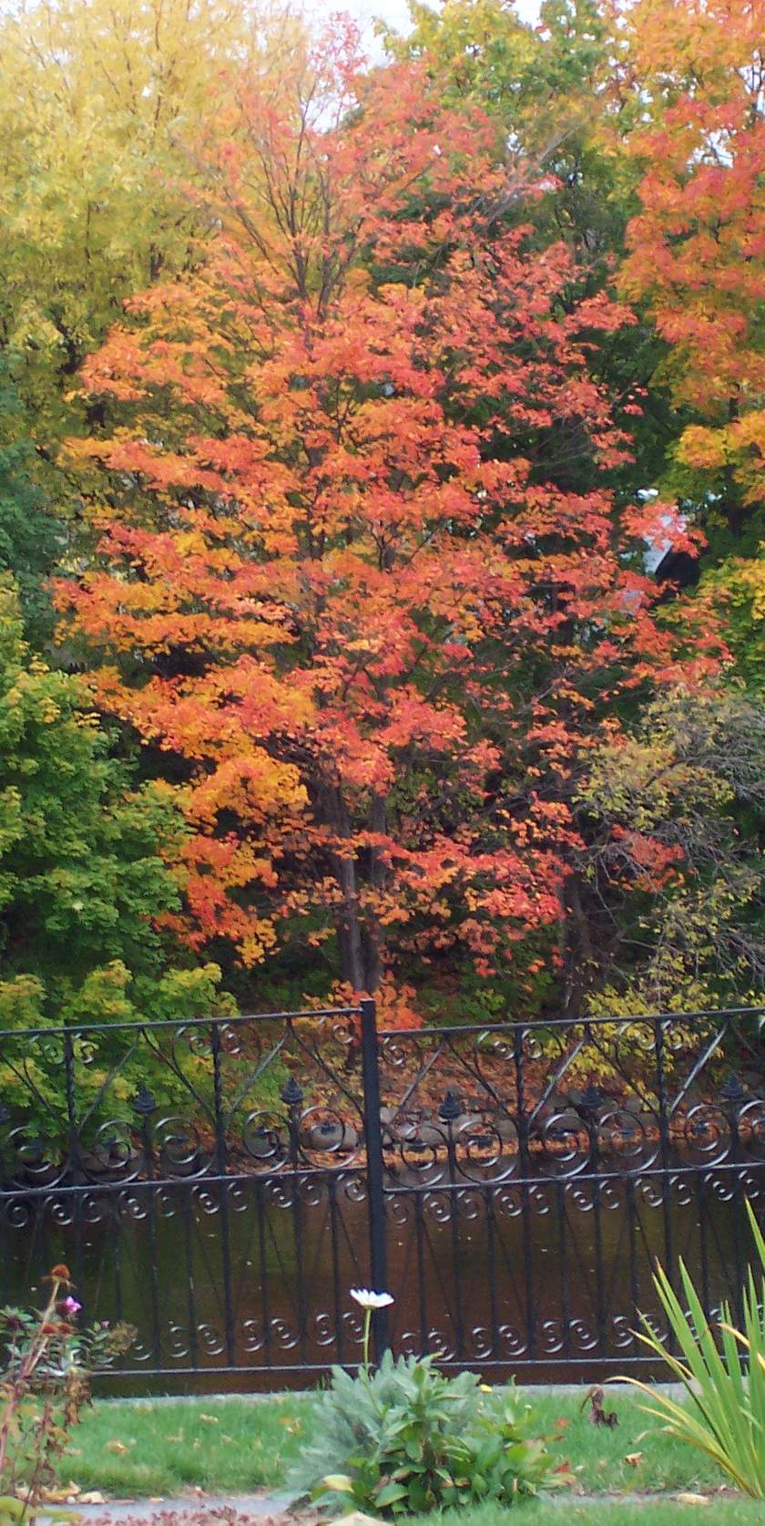 Fall Foliage, Lowell