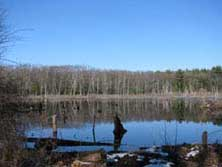 LDT State Forest