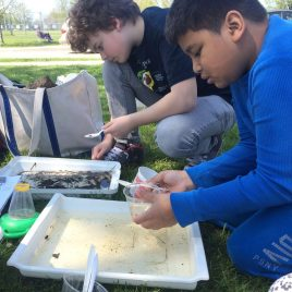 Identifying macroinvertebrates from local water sources