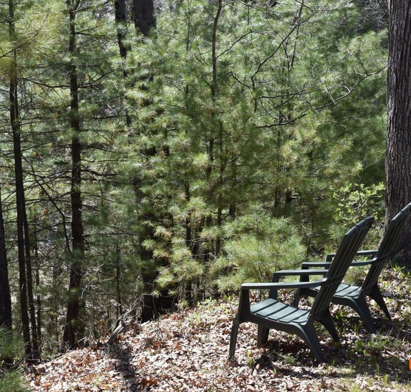 nature, forest bathing, O'Brien Farm, Lowell Parks & Conservation Trust
