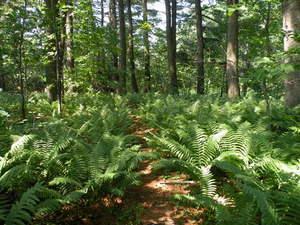 West Meadow Fern Glade Trail
