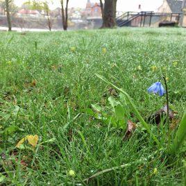 A rainy, spring morning at the park